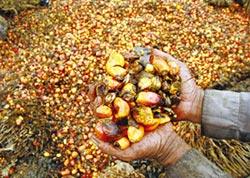 棕櫚油大國叫陣歐盟