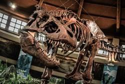 高中生挖到恐龍牙 學者驚:新品種