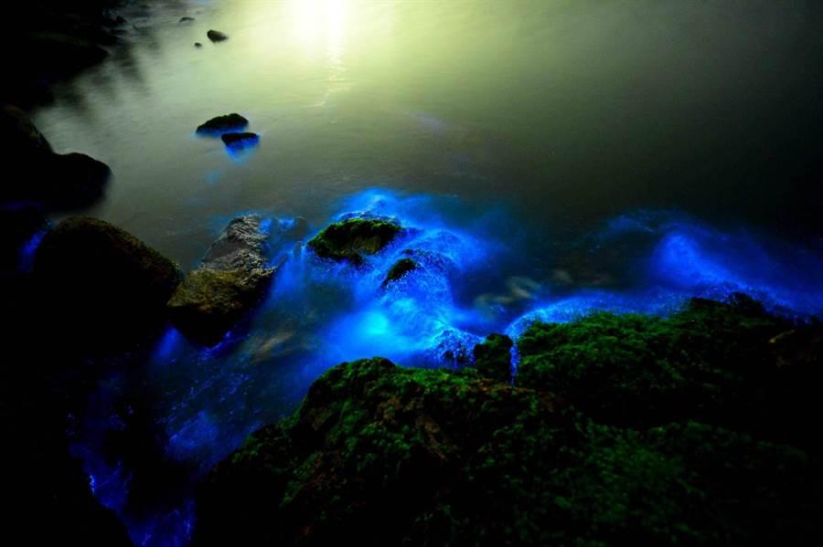 藍眼淚讓曾經烽火連天的金門海岸也浪漫起來。(金門縣攝影學會提供)