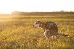為何狗狗大便會轉圈?竟和這有關