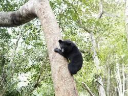 相機被竊職員遭威脅 黑熊保育陷危機