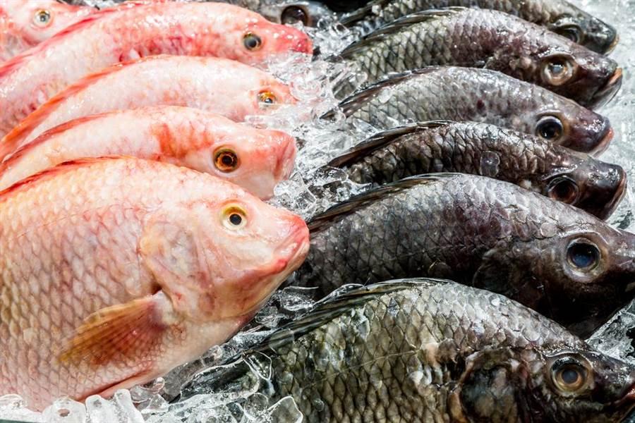 吃魚別吃魚膽!某些魚類的魚膽,毒性僅次於河豚。(示意圖/達志影像)