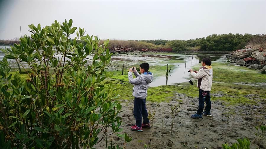 位於七股的光復國小是台南市4所實驗小學之一,校園旁就可看到紅樹林、招潮蟹,校方還成功復育已經絕種的「紅茄苳」。(莊曜聰攝)