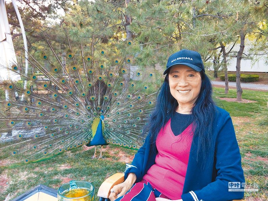 北京台商黃紫玉接受本報訪問,分享打造生態園的甘苦,一隻孔雀湊近開屏。(記者陳君碩攝)