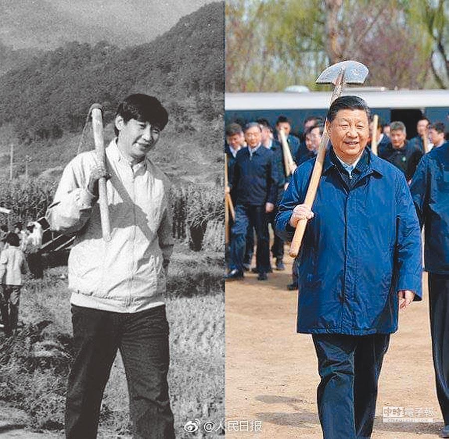 中共總書記習近平日前在北京植樹時扛起鐵鍬,陸媒翻出習30年前任寧德地委書記的下田照,動作如出一轍。(取自人民網)