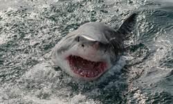 驚見2千公斤大白鯊 吞海龜被噎死