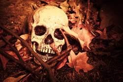 清明祭祖…他挖父骸骨裸身合照