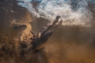 投放鱷魚屍體 深海怪物狂咬好震撼