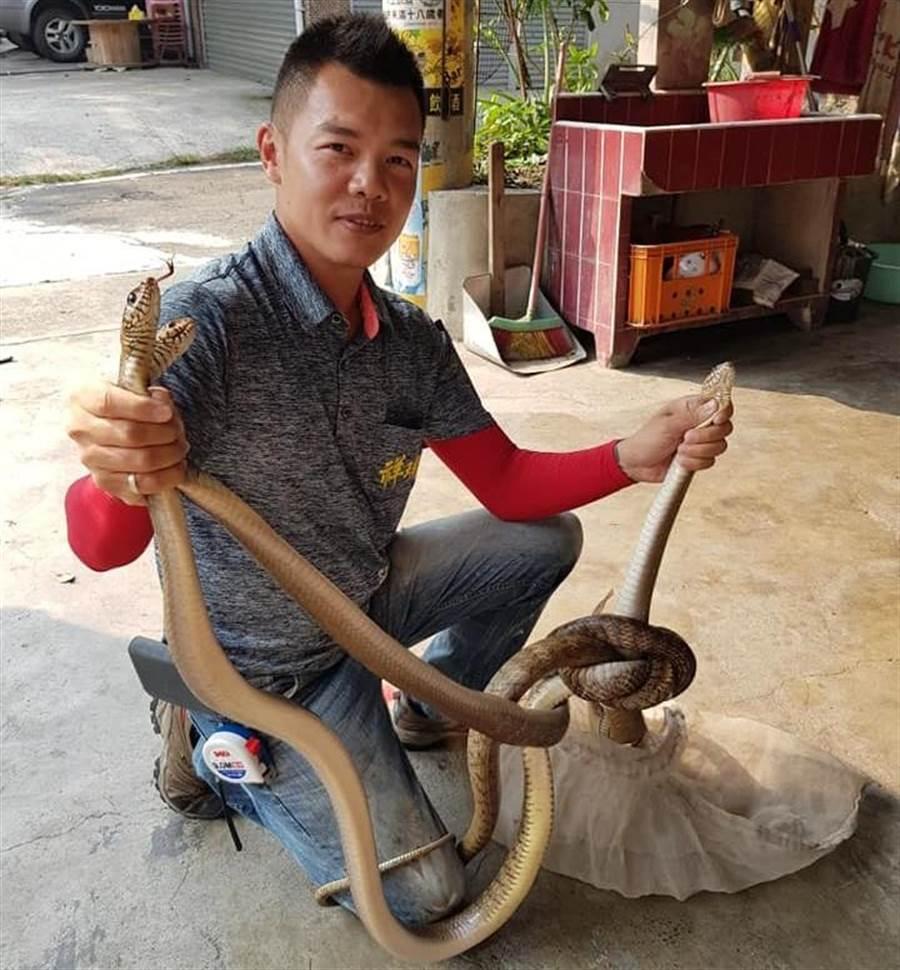 陳先生鐵工技術高超,抓蛇也相當有一套。(楊漢聲攝)