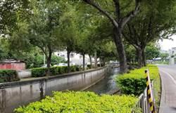 中市楓樹里萬種「楓」情 形成慢活宜居聚落