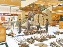 陸化石醫生 讓恐龍復活站起來
