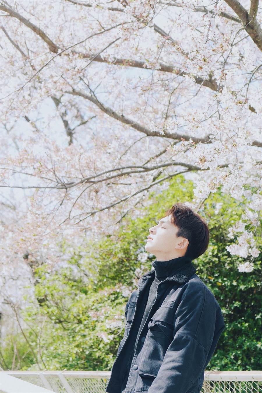 張洛偍去日本時正好遇上滿開櫻花,帥哥加上櫻花十分愜意。(圖/周子娛樂提供)