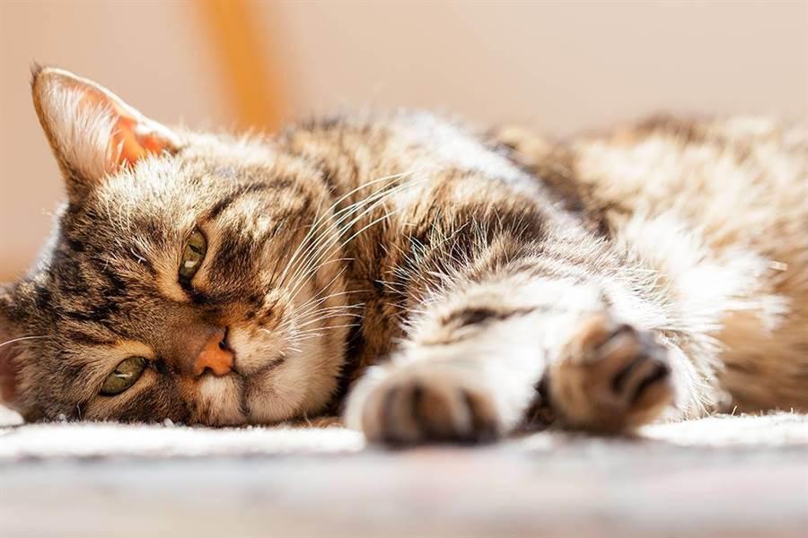 「寵物飼主態度與行為大調查」發現大多數的飼主對輔助治療寵物疾病的保健食品認知非常有限。