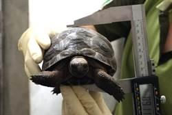 象龜寶寶慶週歲!張大眼享受「日光浴」