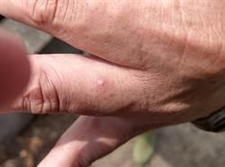 竹市紅火蟻危害公園 農田也失守農民遭螫咬