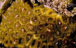 墾丁珊瑚產卵大爆發 潛客形容美得像「海底夜市」