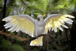瀕危鸚鵡強上人類 竟成「民族英雄」