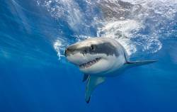 鯊魚「假牙」突噴出!網友全笑傻