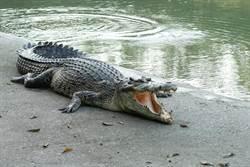 澳男溪邊釣到大魚!下秒驚見巨鱷衝出水面