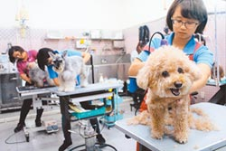 台灣少子化 助長毛小孩經濟