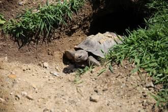 一龜一狗一人全卡在後院洞裡!消防員驚呆急救援
