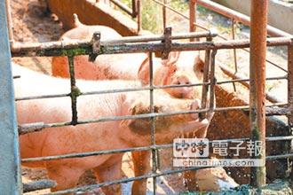 畜牧業遊說團 目標轉向農民