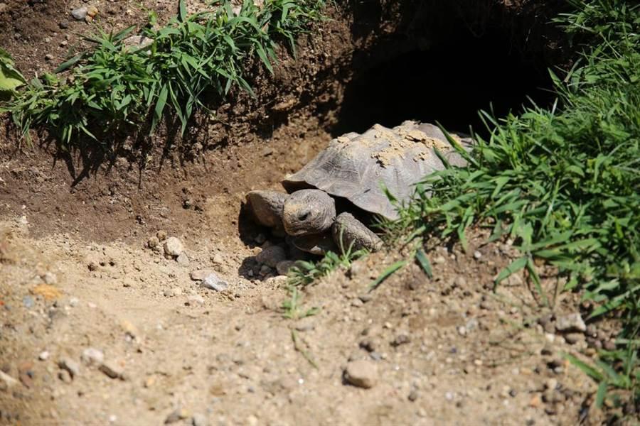 一龜一狗一人全卡在後院洞裡!消防員驚呆急救援(示意圖/達志影像)
