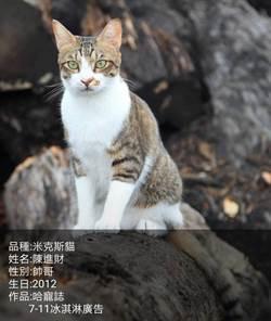 寵物經濟崛起  文大推廣部寵物課程找貓界名模陳進財代言
