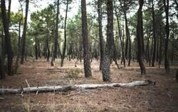前女友約山上「找刺激」 他被脫光綁樹結局超慘