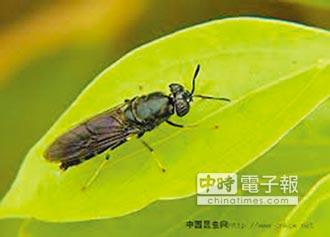 杭州昆蟲農場 年吃3400噸廚餘