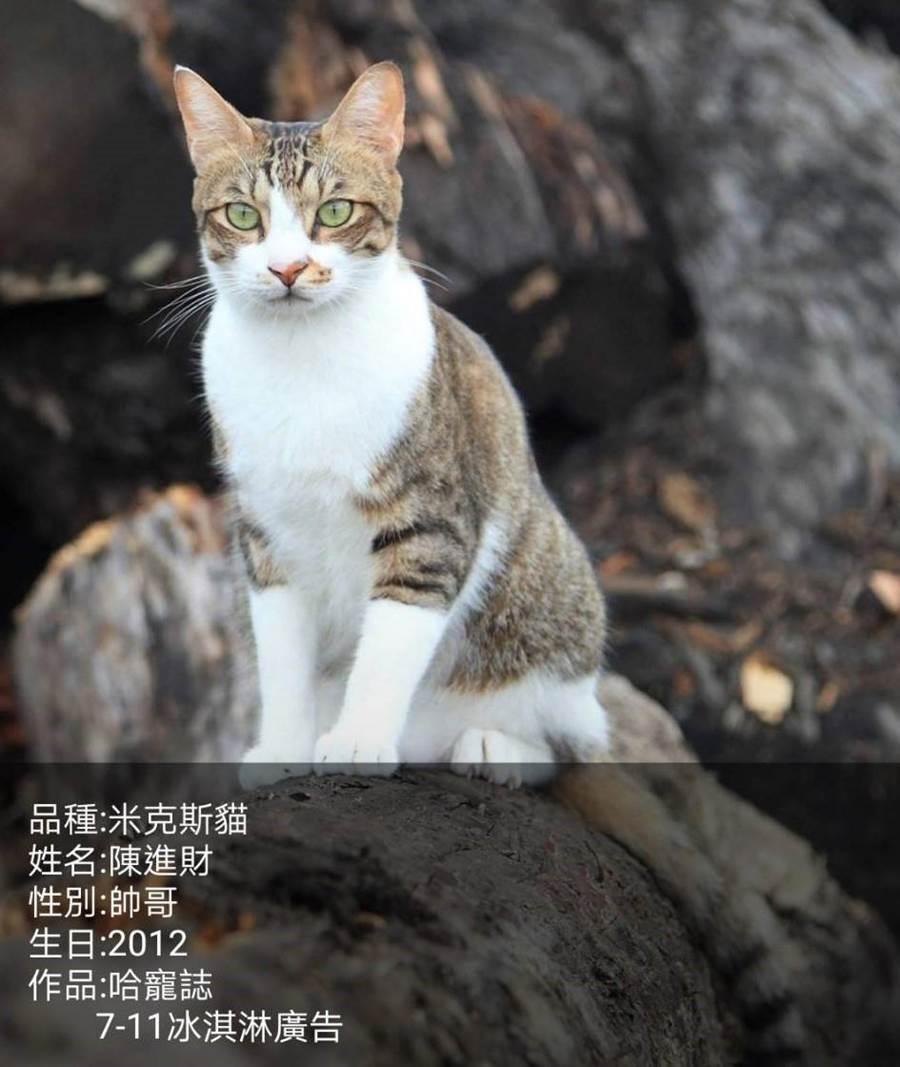 文大推廣部今年開設25門寵物課程,由貓界名模陳進財擔任代言人。(文大推廣部提供)