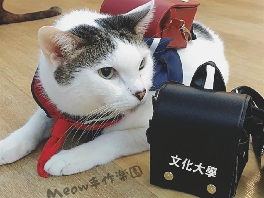 寵物商機大,文大推廣部今年開了不少寵物相關課程。(文大推廣部提供)