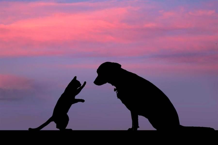 有洋蔥!朋友狗狗過世1年 牠仍堅持天天等門(示意圖/達志影像)