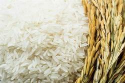 農藥噴稻米上?雲林菜農嗆爆1450