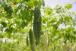 逾7成台灣兒童愛挑食!蔬菜類最怕苦瓜、青椒、茄子