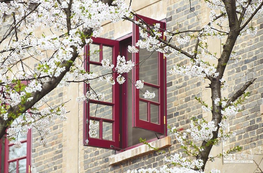 3月下旬,武漢大學的櫻花與建築交相輝映。(新華社)