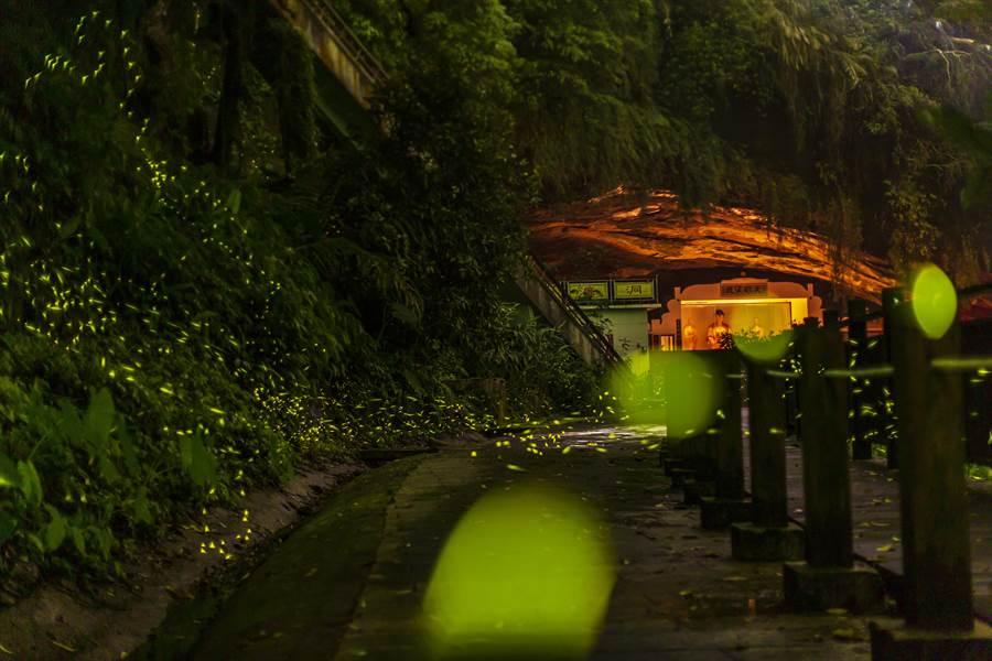 峨眉鄉獅頭山風景區的水濂洞,是攝影愛好者拍攝螢火蟲的熱門景點之一。(羅浚濱攝)