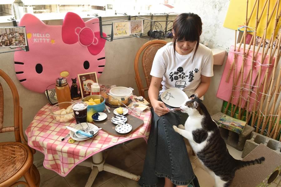 輔導教師陳小藍將貓咪視為家人,在陽台為3隻貓咪打造舒適的樂園。(廖肇祥攝)