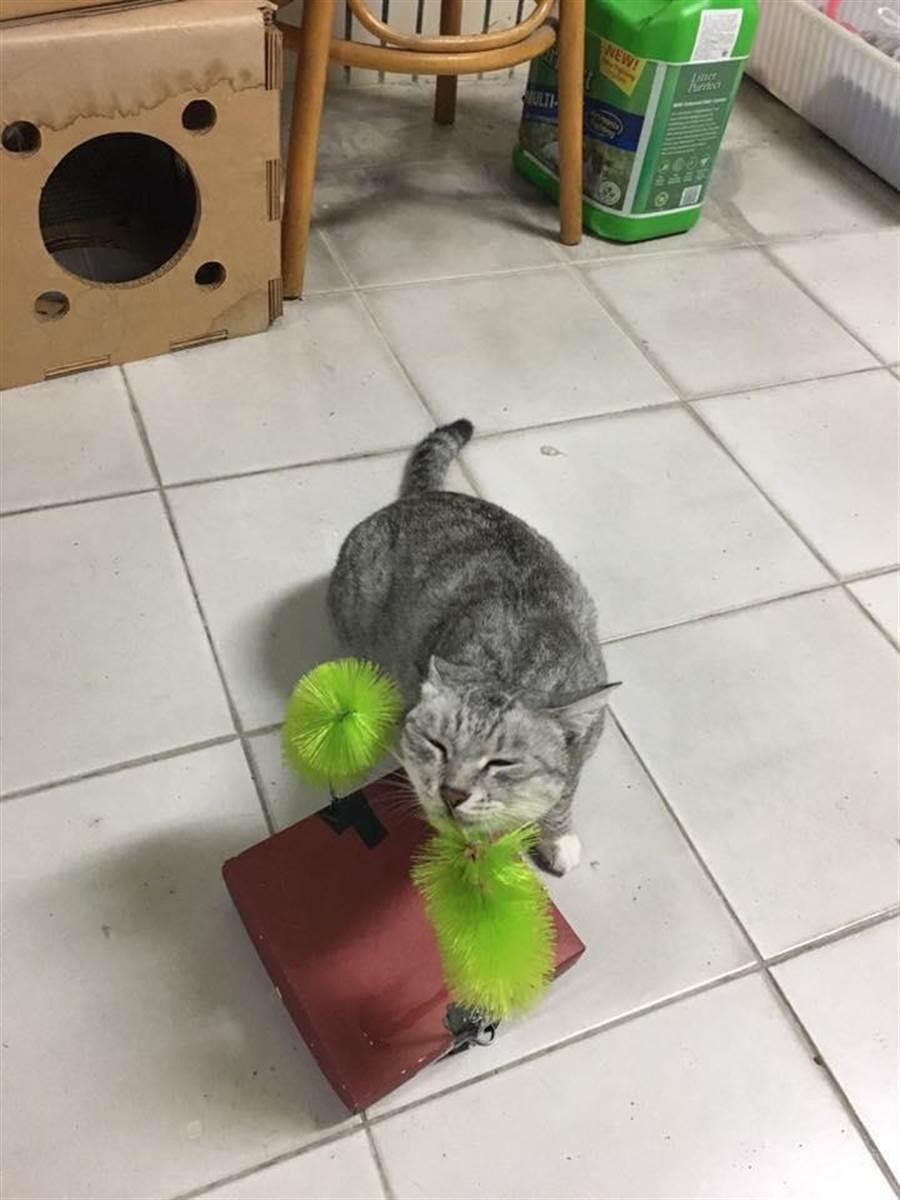 輔導教師陳小藍為3隻貓咪打造舒適的樂園,擅長手作的她還用杯刷做了抓癢台。(圖/陳小藍提供)