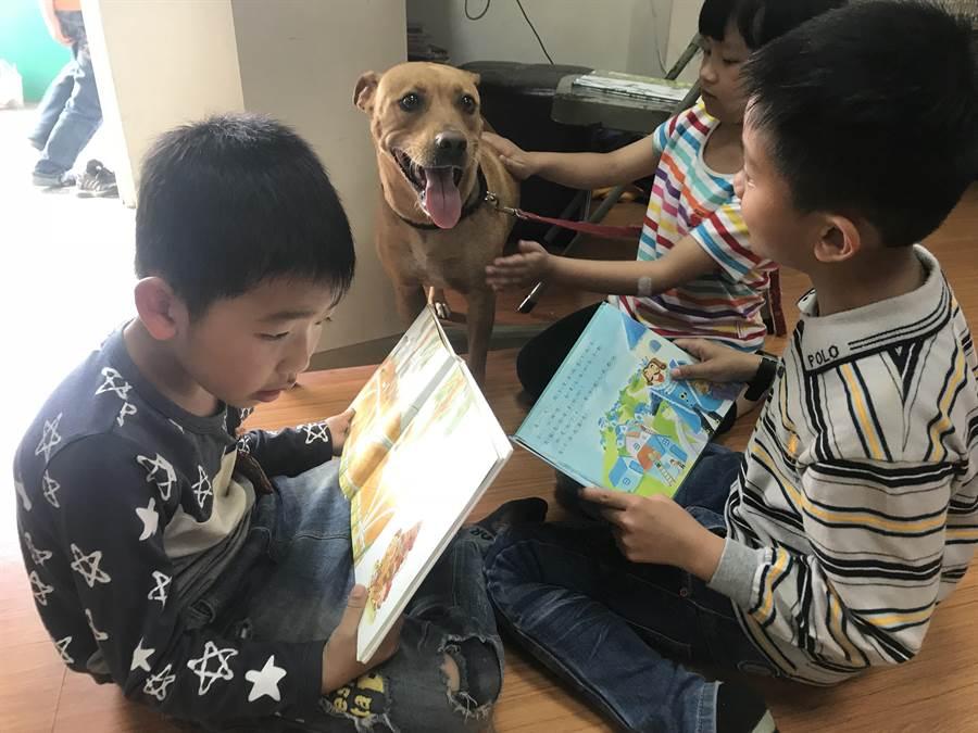 「豆豆」是文德國小校犬,人氣超旺,備受全校師生寵愛,結下令人難忘的人狗情緣。(謝瓊雲翻攝)