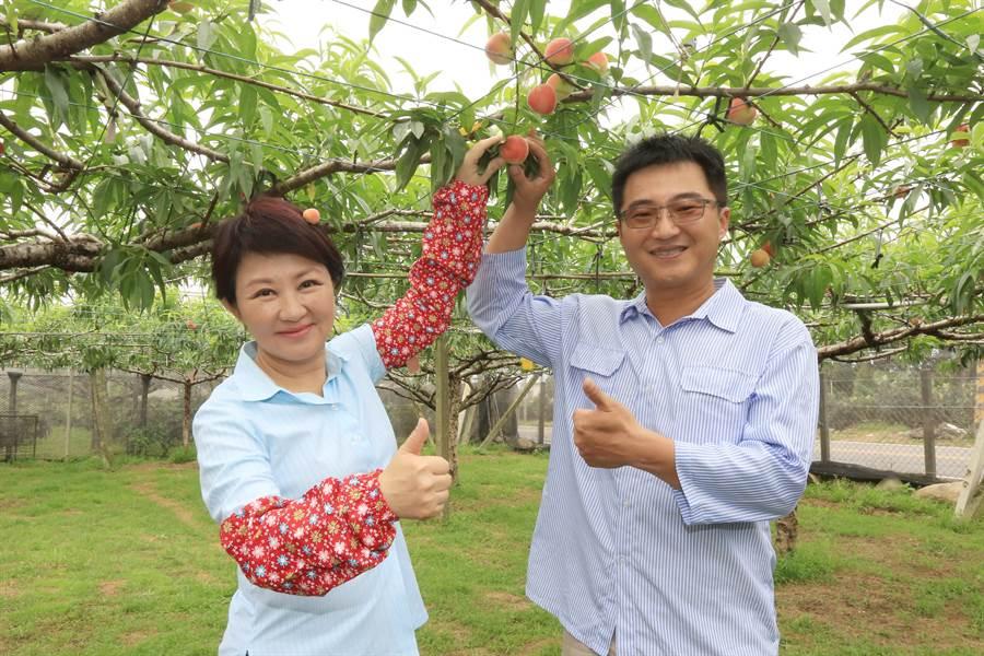 今年桃子受暖冬因素減產4成多,台中市長盧秀燕(左)到新社觀光果園行銷。(陳淑娥攝)