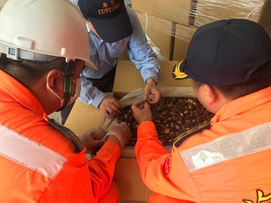 可疑大陸香菇均已採樣送交農委會農糧署鑑定。(岸巡提供)