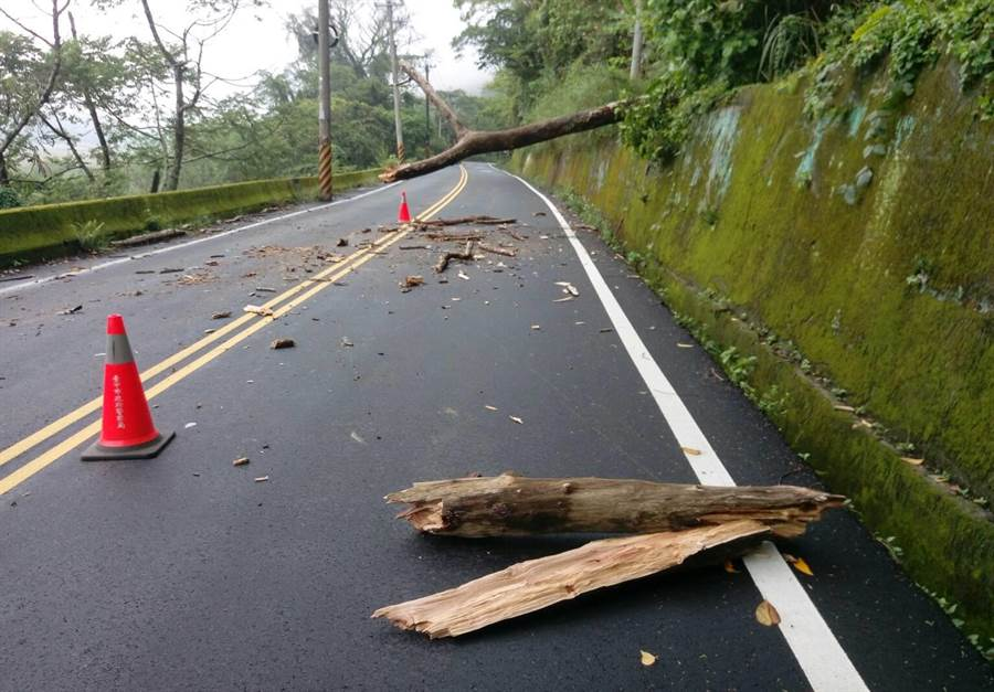 生長於東勢林管處所屬117林班地的樹木,疑朽壞斷裂,從邊坡突然倒下,砸中路過車輛。(讀者提供)