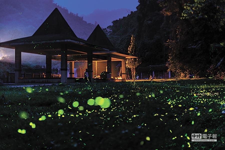 北埔冷泉山每到螢火蟲季,常出現人比蟲多的景象。(羅浚濱攝)