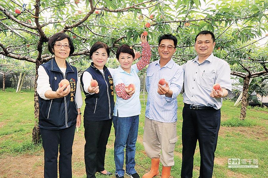 今年桃子受暖冬因素減產4成多,台中市長盧秀燕(中)到新社觀光果園行銷。(陳淑娥攝)