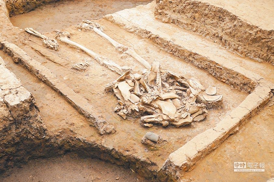 河南南陽發現5000年前玉石器製作中心聚落和疑似氏族首領墓葬。(新華社資料照片)
