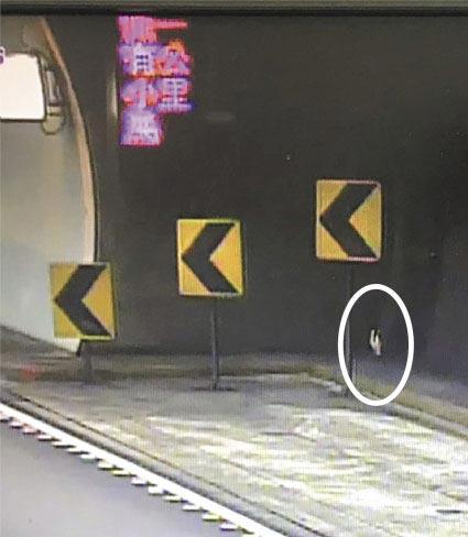 雪山隧道因為有鳥類誤闖而緊急封閉車道,卻是史上頭一遭!(胡健森翻攝)