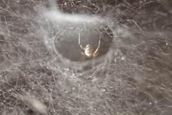 耳朵奇癢難耐 醫驚見「蜘蛛織網」