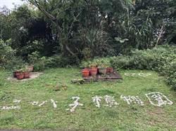 「新店萬花桐」5月4日於二叭子植物園登場