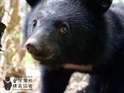 南安小熊野放讓媒體跟拍 內政部致歉